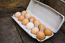 Eggs-Farm Fresh