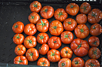 Conventional:Red Tomatoes 10 lbs.