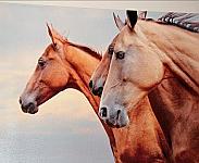 Canvas Print - Wild Horses 16H x 24W