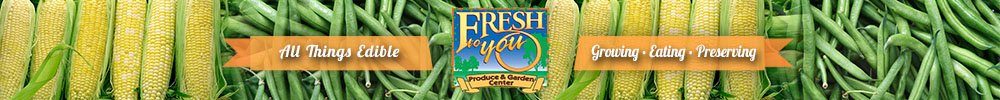 Corn from Fresh To You Produce